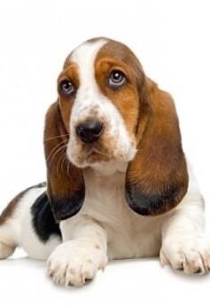 cane-contro-asma-bimbi