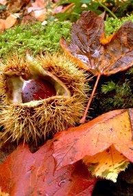 autunno-slow-per-un-viaggio-con-i-bimbi