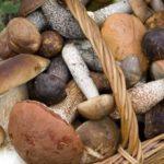 Funghi, decalogo per non correre rischi